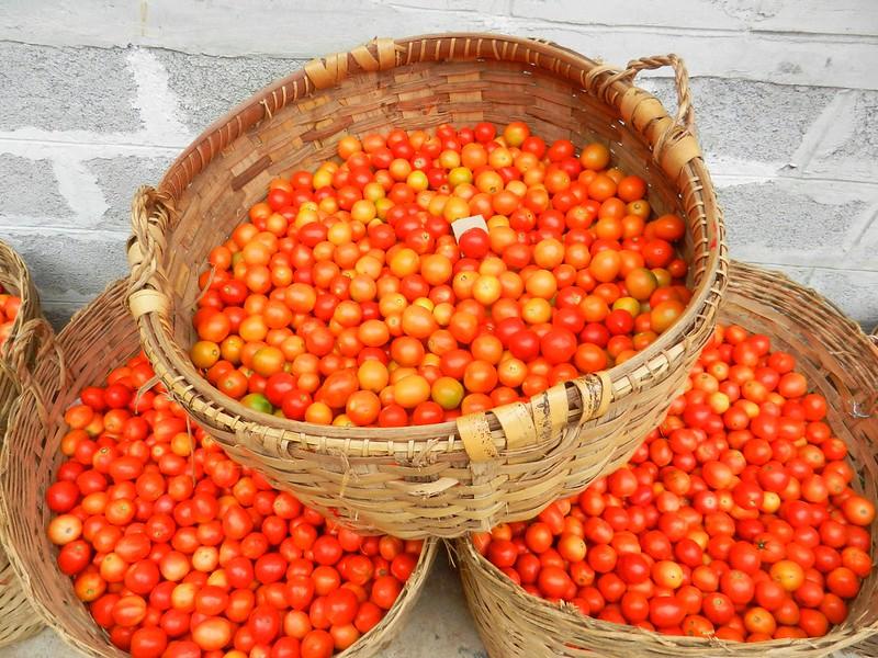 Инле помидоры