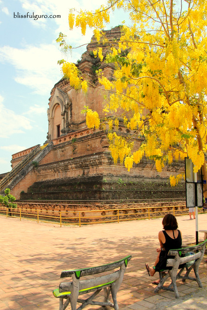 What To Do In Chiang Mai Thailand