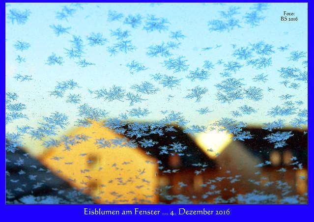 Mannheim-Seckenheim, 4. Dezember 2016 ... Eisblumen am Fenster ... Foto: Brigitte Stolle 2016