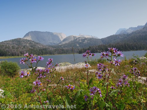 Wildflowers near Big Sandy Lake in the Wind Rivers of Wyoming