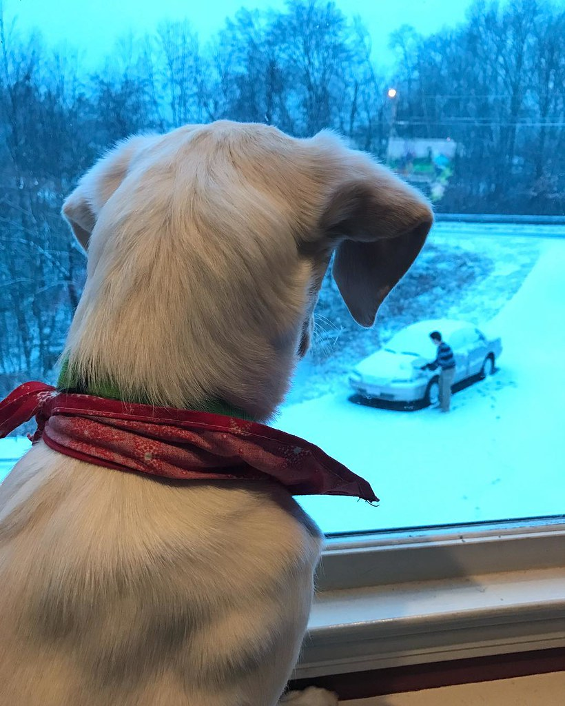 Jaz isn't sure what this white stuff is as she watches Dylan clean the snow off his car for the first time this winter.