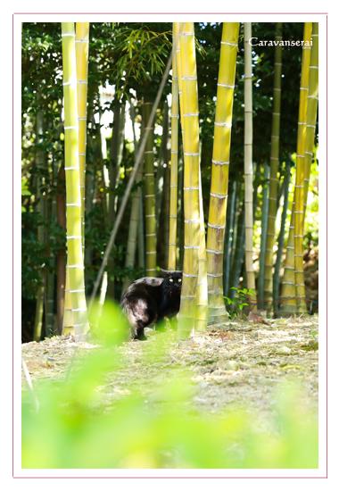 七五三写真,八事山興正寺(名古屋市昭和区),ロケーション撮影,出張撮影,着物,和装,自然,出張カメラマン,全データ