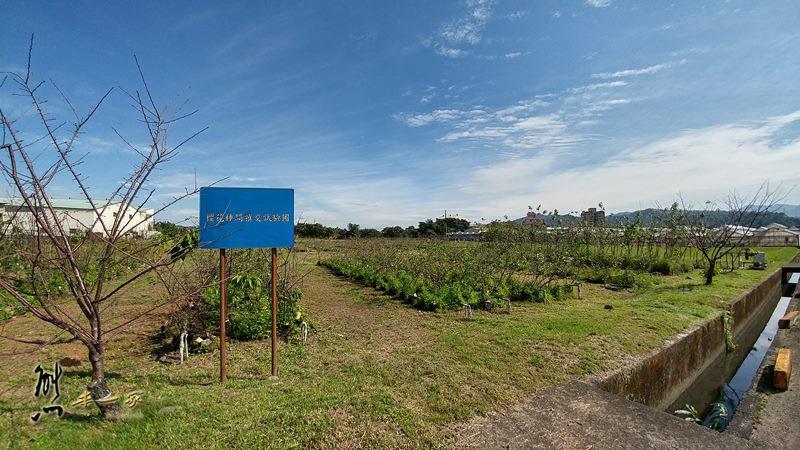 桃園農業改良場台北分場|佳園路農改場|樹林花海