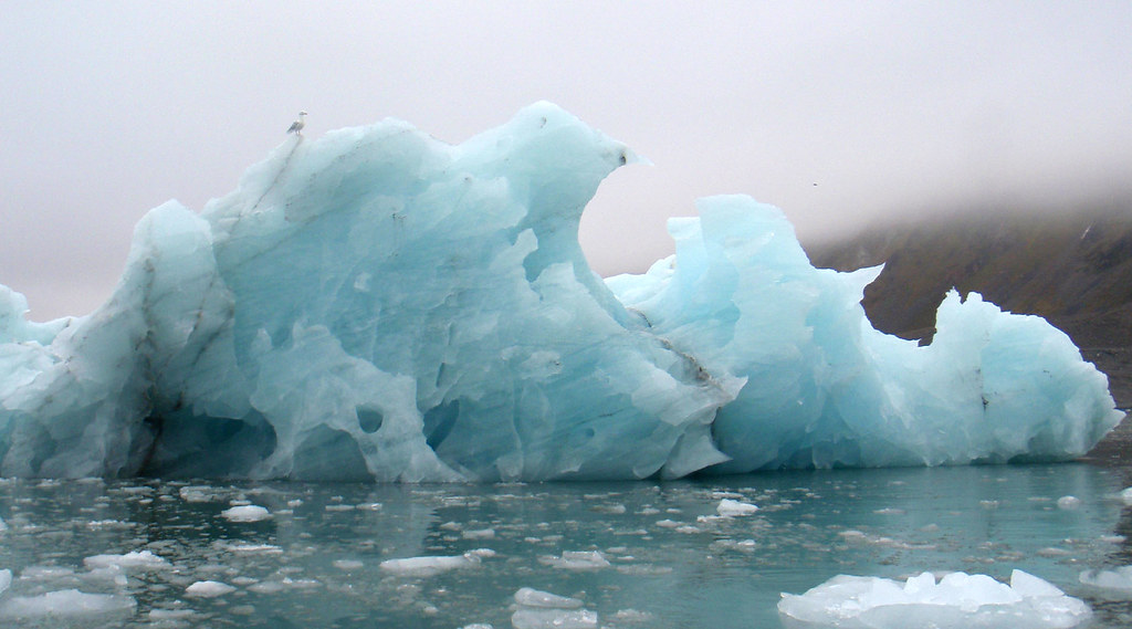 An iceberg floats in the Arctic Ocean around Svalbard, with a seagull perched on the top