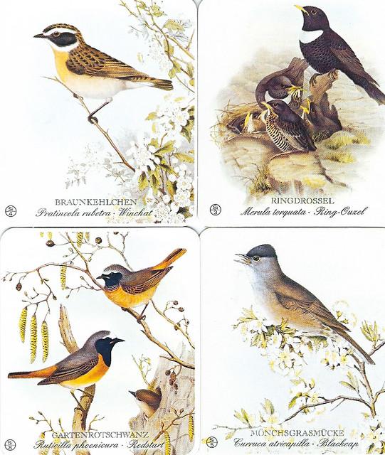 Unsere Vogelwelt_Erkennungsbilder nach alten Lithographien von John Gould_Braunkehlchen Ringdrossel Gartenrotschwanz Mönchsgrasmücke