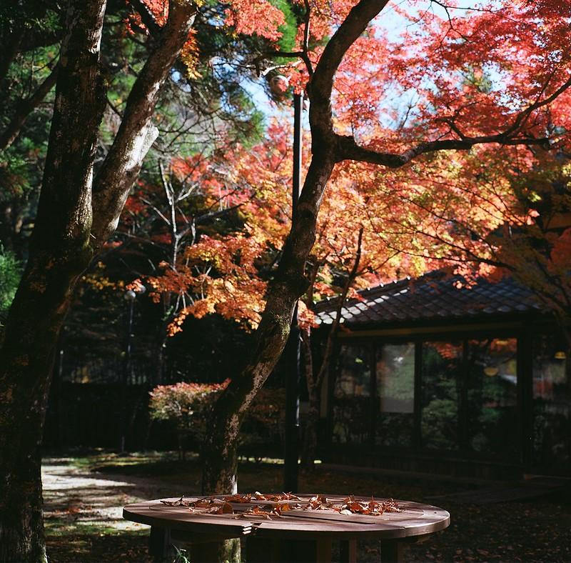 亀の井別荘|金鱗湖
