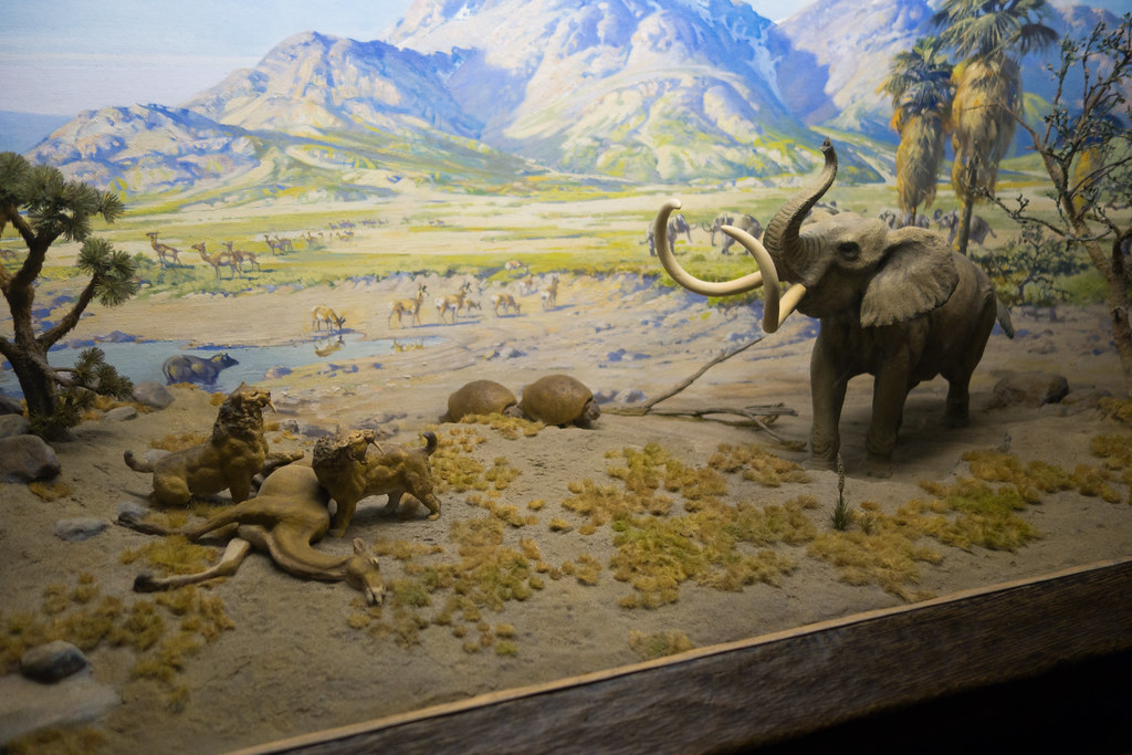 Natural History Musuem Teen Volunteer