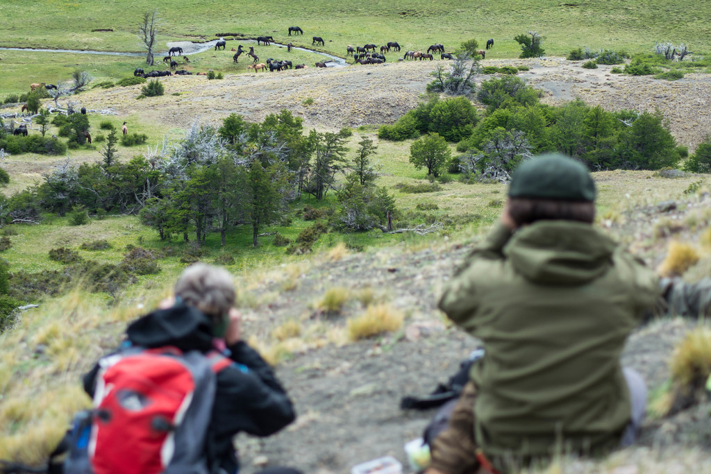 Tracking the Wild Horses of Patagonia
