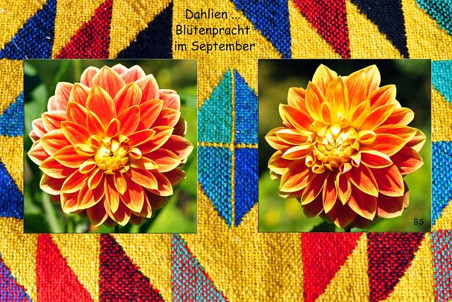 September Garten Bauerngarten Dahlie ... Fotos: Brigitte Stolle 2016