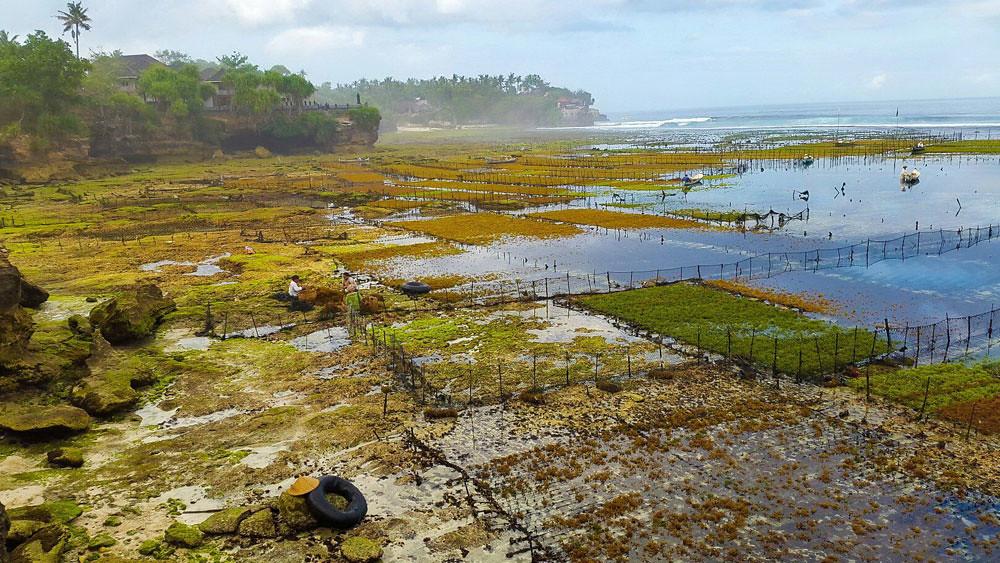 4b-seaweeds-via-Min