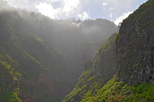 In the Barranco de Ruiz, Tenerife
