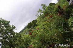 De Monet tuinen - Giverny - Frankrijk