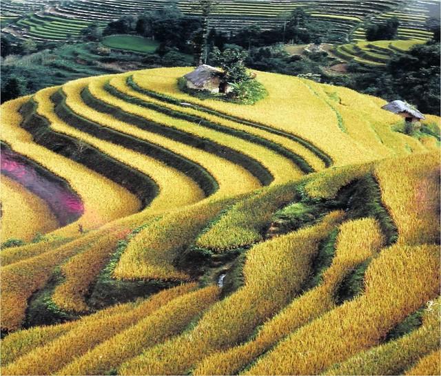 哈尼族的梯田農業。圖片提供:王清華。