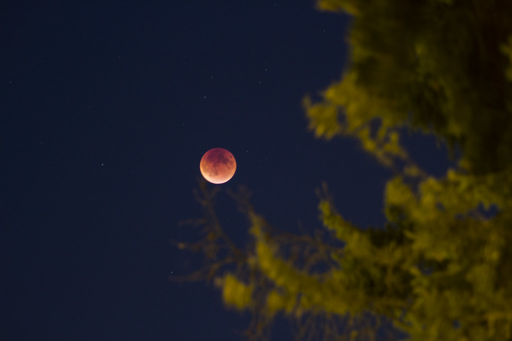 blood moon eclipse taken in shoreline wa flickr