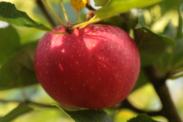 red apple color measurement in agriculture