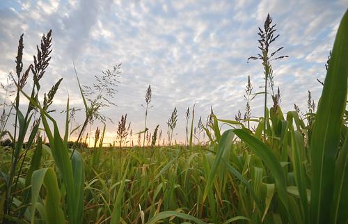 La granja de Jonathan Cobb con cultivos de cobertura