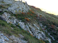 Traversée du 1er vallon sans nom à l'W de la crête de Timozzu : le sentier est assez visible