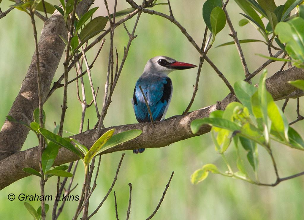 Bird List — Mara Conservancy