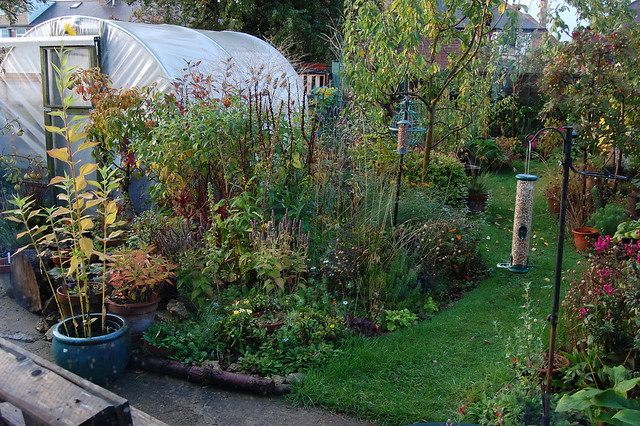 A view of the back garden from a downstairs window
