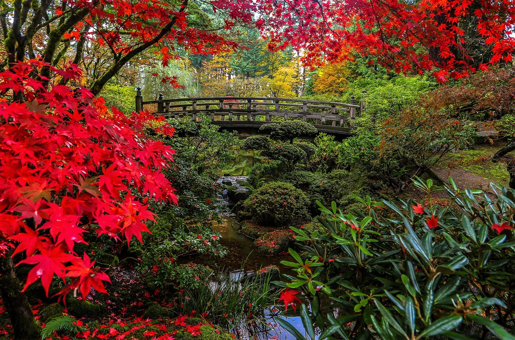 Japanese garden portland autumn colors in portland for Japanese garden colors