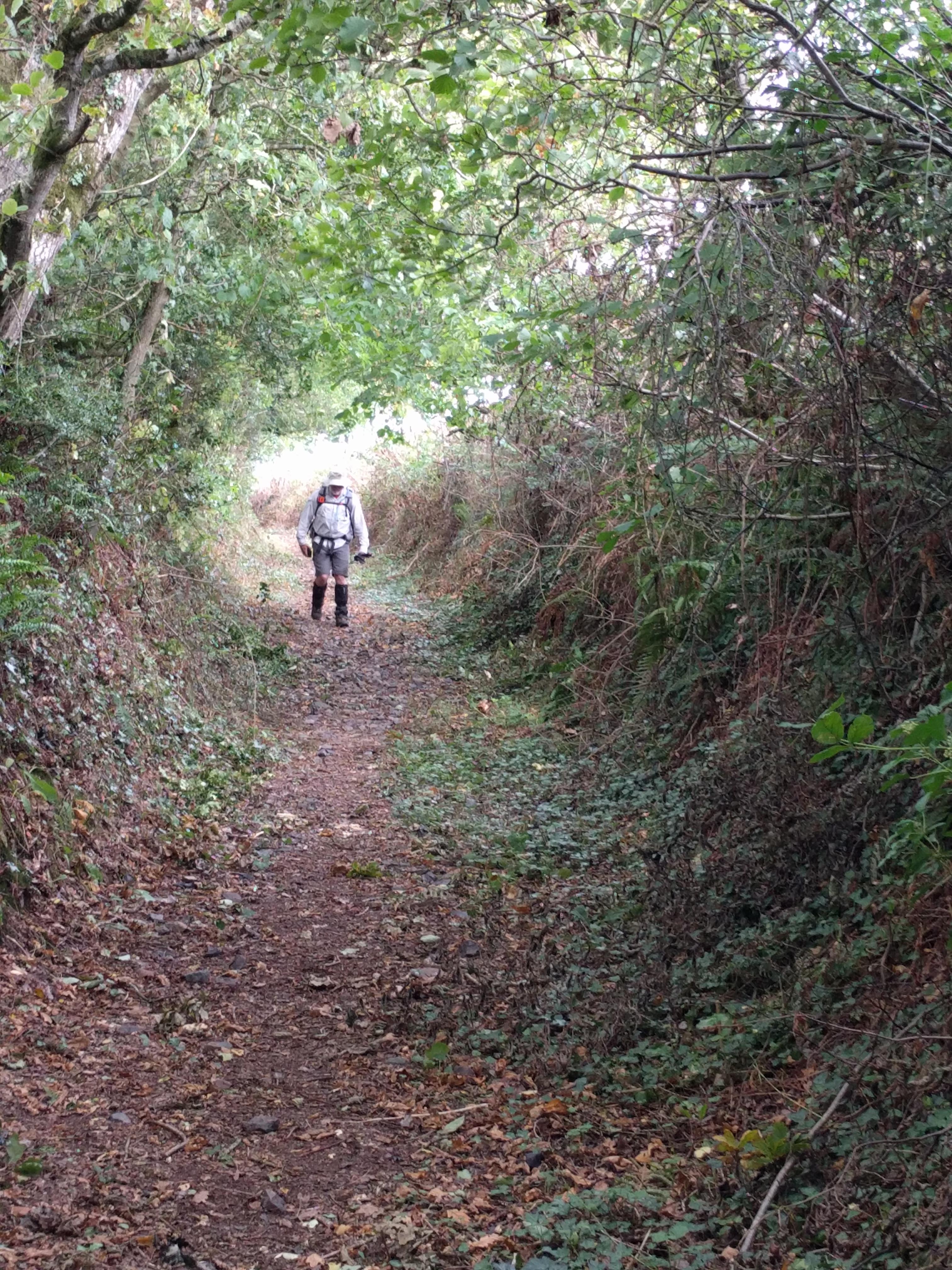 Near Landsend Barton #sh #twomoorsway
