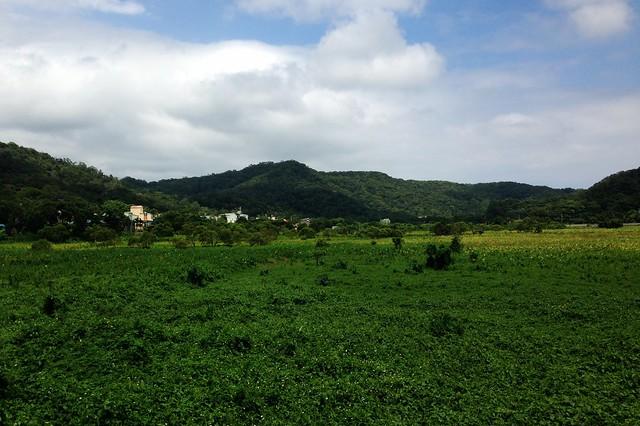 東源濕地是一片水上草原。攝影:廖靜蕙