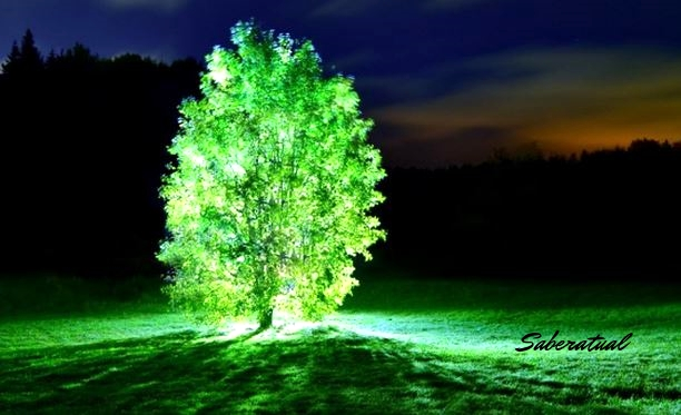 Japão - Árvores como uma alternativa à luz elétrica
