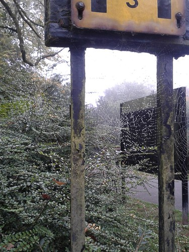 Cobwebs at Waterlow Park