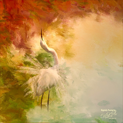 Image of a Snowy Egret on Painted Texture