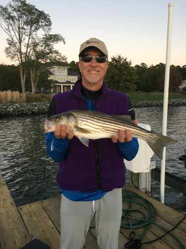 Weekly fishing report archive for Choptank river fishing report
