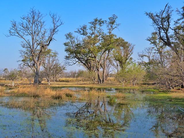 Paradise Island (Moremi, Botswana)