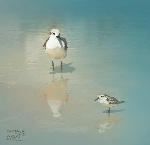 Image of Beach Birds in the Tidal Waters