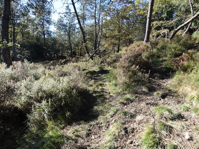 Camino en la Ruta Pena Montol - Fragavella