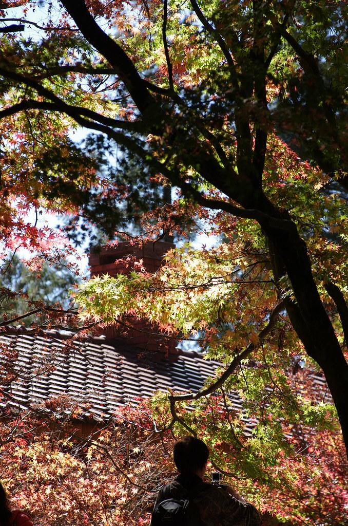 楓 × 福壽山