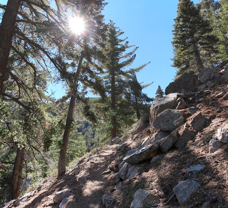 I start the final climb on the San Bernardino Peak Trail toward Limber Pine Bench