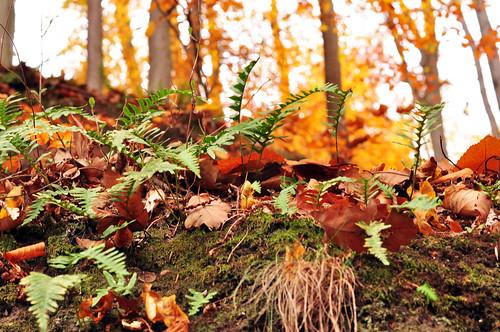 November Wald Neckarsteinach bunt Spaziergang Laub Herbst Herbstfarben Pilz Baum Farn Foto Brigitte Stolle Mannheim 2015