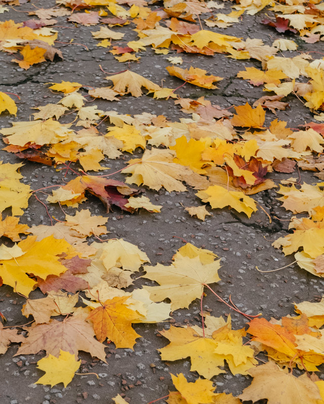 yellow leaves on pavement