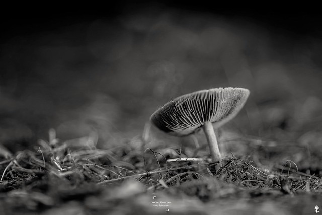 black mushroom nature photography