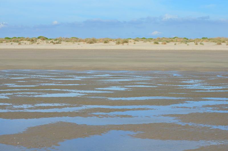 PN. Doñana, dunas, pinos y bichos 23358881591_12d8c780a2_c