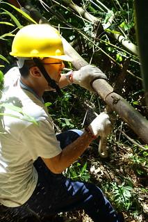 負責竹林疏伐的環境維護組必須在山坡上保持平衡、找到施力點,是本次最吃重的工作。攝影:詹以屏。