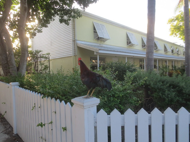 Cock of the fence
