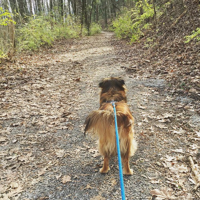 Jan. 2: Hiking with my fluffy-assed companion. #project365