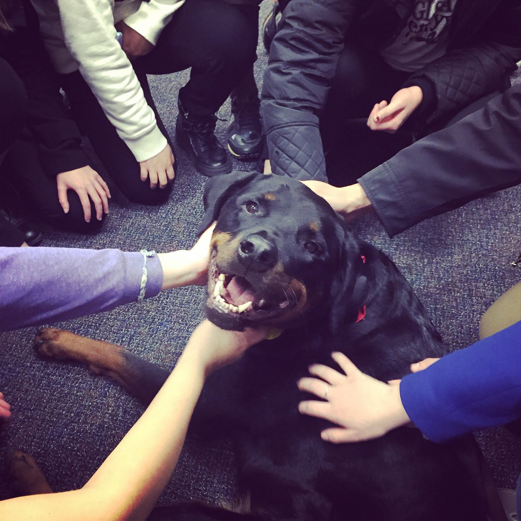 Atlas Therapy Dog