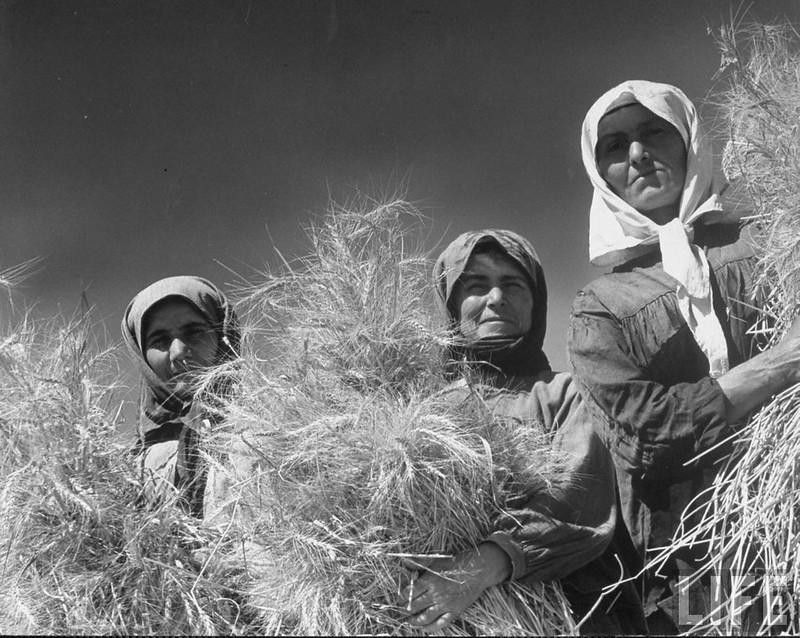 Русская деревня в XX веке
