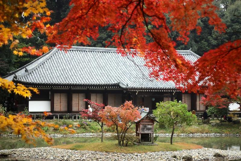 浄瑠璃寺(2016.11.20)
