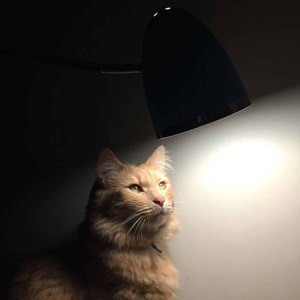 sampson captured under the lamp light, looking a little moody