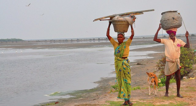 A couple trudges back home carrying their day's worth of fish and prawns, along with their nets. For the nearly 35,000 fishermen and farmers live around the sanctuary, this land is a means of livelihood.