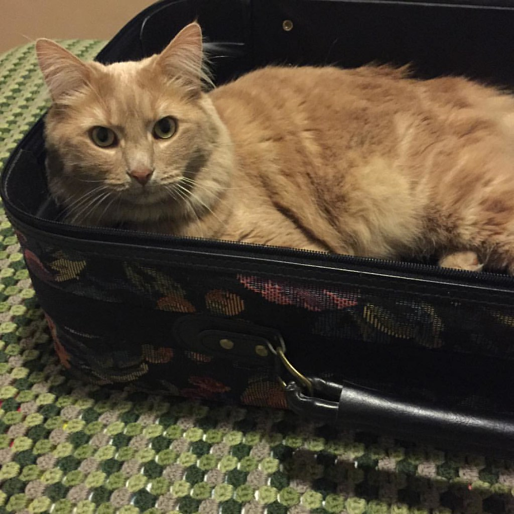 sampson, the ginger kitty, lying in a carpet suitcase