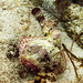 scorpionfish face to face key west sailing adventure