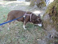 Tree sniffing Hyzzie